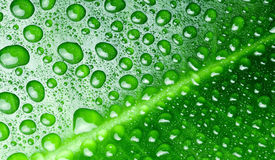 Water drops on a green leaf. Stock Photo