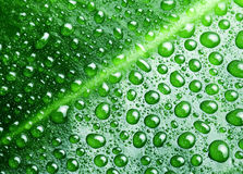 Water drops on a green leaf. Stock Photography