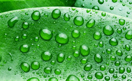 Water drops on a green leaf. Royalty Free Stock Image