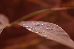 Water drops on a green leaf royalty free stock photo