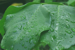 Water drops on a green leaf Stock Image