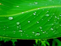 Water drops on green leaf, Beautiful nuture background. Royalty Free Stock Image