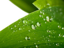 Water drops on a green leaf Stock Photo
