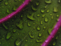 Water drops on green leaf - close-up Stock Images