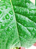 Water drops on green leaf. Close up of water drops on green leaf in sunshine Stock Images