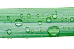 Water drops on green leaf isolated Stock Image
