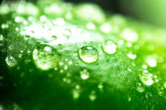 Water drops. On green leaf macro background Royalty Free Stock Image