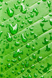Water drops on green leaf macro background Royalty Free Stock Images