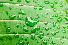 Water drops on green leaf macro background Stock Images
