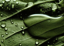 Water drops on green leaf Stock Images