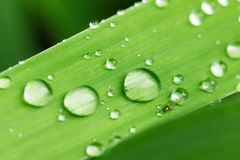 Water drops on green leaf macro. Fresh abstract background Royalty Free Stock Image