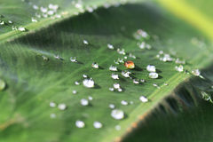 Water drops on a green leaf Stock Photos