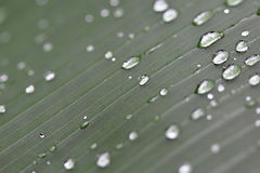 Water Drops on the Green Leaf Stock Images