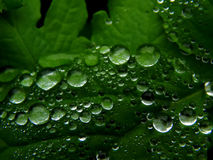Water drops on green leaf of a plant. Close up Stock Image