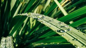 Water Drops on Green Leaf Plants Stock Images