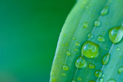 Water drops on green leaf after rain Stock Images