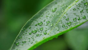 Water drops on green leaf stock footage