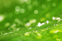 Water drops and green leaf texture background Stock Photo
