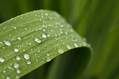 Water drops. Water drops on green leave Stock Image