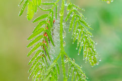 Water drops on the green nature Royalty Free Stock Photography