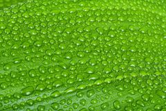 Water drops on green plant leaf Stock Photo
