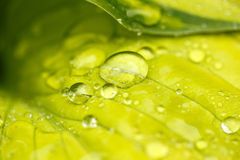 Water drops on green plant leaf Stock Images
