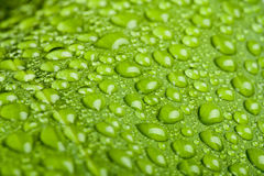 Water drops on green plant leaf Royalty Free Stock Photos