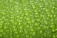 Water drops on green plant leaf Royalty Free Stock Photography