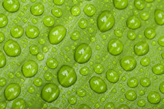 Water drops on green plant leaf Stock Photography