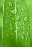 Water drops on green plant leaf Stock Photos