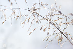 Water drops and ice peaces on plant stems. Stock Image