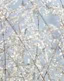 Water drops and ice on plant stems. Royalty Free Stock Photos