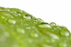 Water drops on a leaf Stock Photos