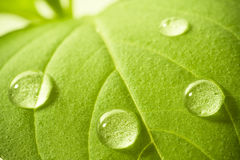 Water drops on leaf. Stock Images