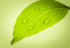 Water drops on leaf. stock photography