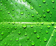 Water drops on leaf Stock Photos