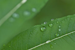 Water drops on leaf Royalty Free Stock Photography