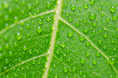 Water drops and leaf Stock Image