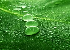 Water drops on a leaf Stock Image