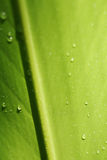 Water drops on leaf. Abstract green background with water drops on leaf Royalty Free Stock Photos