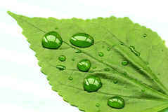 Water drops on leaf Royalty Free Stock Photos
