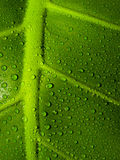 Water Drops on a leaf. Water drops on a green leaf Stock Photography
