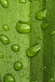 Water drops on leaf background Stock Images