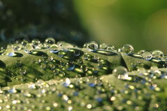 Water drops leaf background Stock Photos