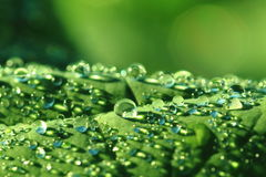 Water drops leaf background Stock Images