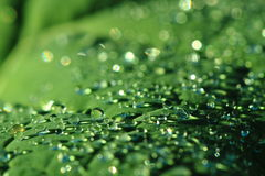 Water drops leaf background Stock Image