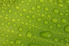 Water Drops on Leaf Royalty Free Stock Photo