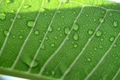 Water drops on leaf closeup Stock Image