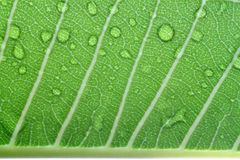 Water drops on leaf closeup Stock Photo