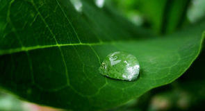 Water Drops in a leaf Royalty Free Stock Image